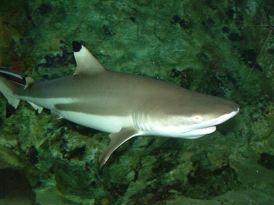 Фотографии - Аквариум в Бергене - акула Апрель 2003 г. вернуться.
